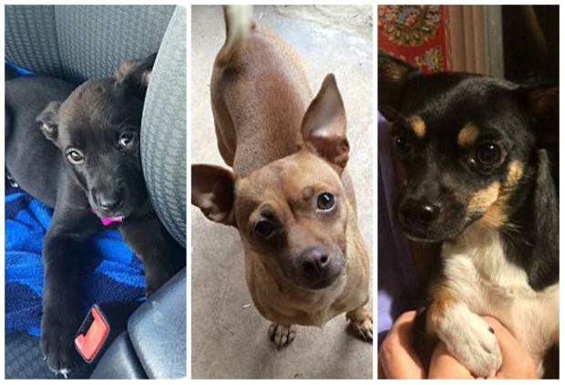 Echo, Sunny and Pickles are available for adoption with Friends With Four Paws.