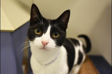 Eleven-month-old Yani is one of the young cats up for adoption at the ASPCA shelter on the Upper East Side.