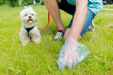 West Englewood gets the most complaints of uncleaned dog poop, according to a new report.