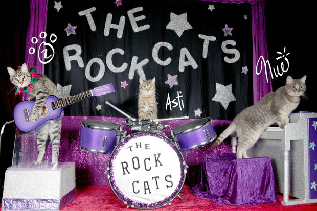 The Amazing Acro-cats, a cat circus act, is coming to Chicago.