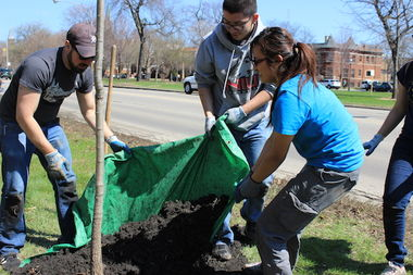 Openlands foresters plant between 300 and 500 trees around the city every year.
