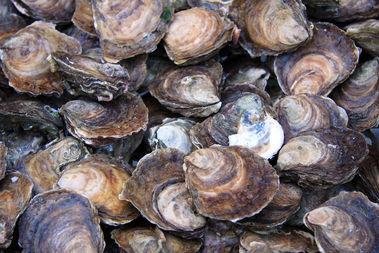 More than 100 oysters, along with clams and mussels were taken from a TriBeCa delivery truck.