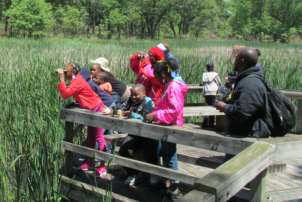 Birds in my Neighborhood is entering its fifth year in 2017 and expanding to reach a total of 28 schools.