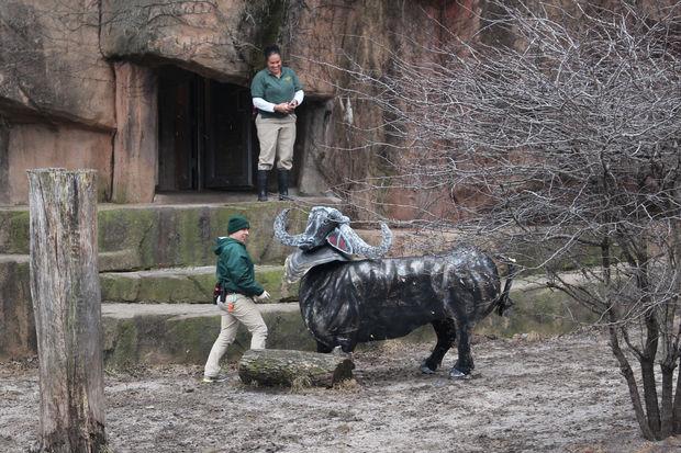 lincoln park zoo s king of the beasts sahar celebrates birthday