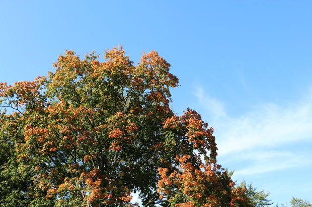 Illinois' leaves have already begun to change color for the fall.