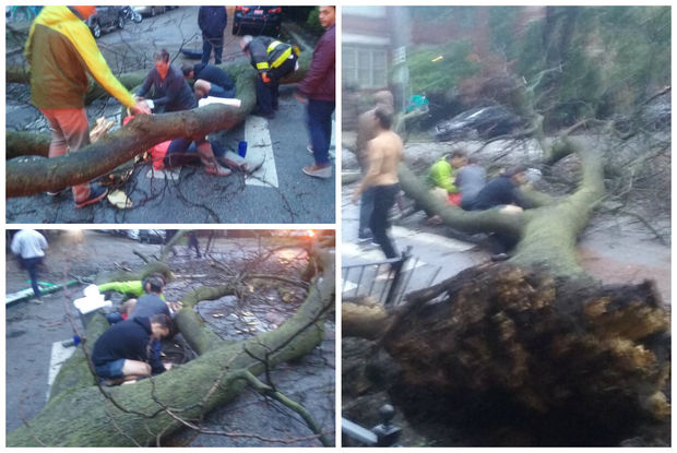 The scene after a tree fell on two women on Oct. 14