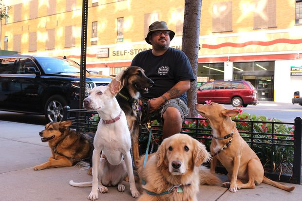 Dog walker Tony Sweet takes up to 15 dogs out for strolls around the neighborhood.