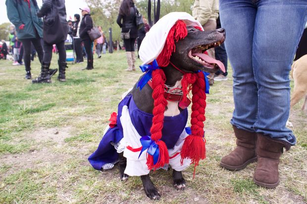Dress your dog in costume for the annual Halloween Harvest Festival at Socrates Sculpture Park this weekend.