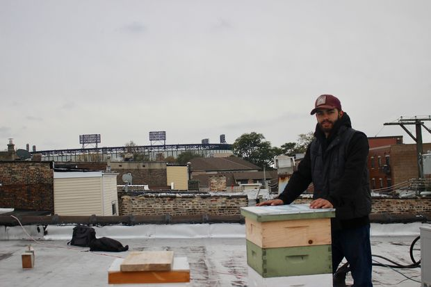 Ray Tominello's startup business, Rooftop Local Honey, has a colony on a Bridgeport rooftop.
