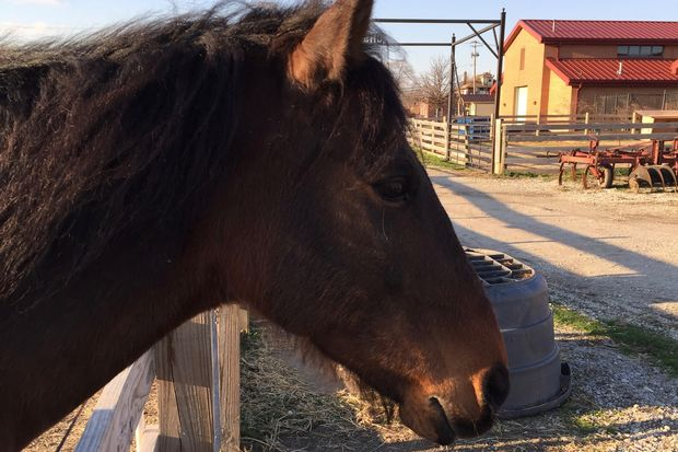 A 13,000-square-foot horse riding facility was approved Thursday for the Chicago High School for Agricultural Sciences in Mount Greenwood, according to the city's Plan Commission.