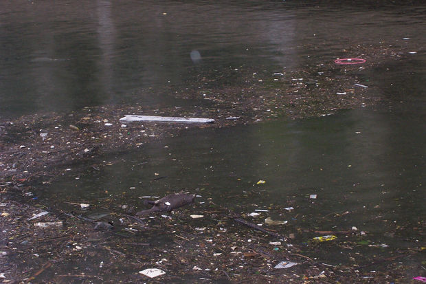 Garbage floats on top of the Chicago River.