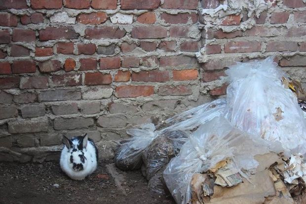 One of the rabbits rescued from behind a Gowanus tire shop on March 1, 2017.