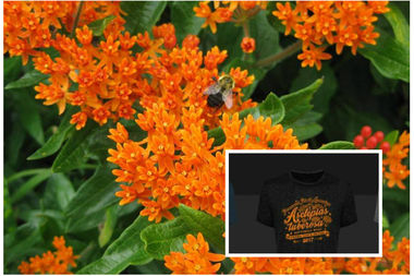 Butterfly Weed earned the honors from the Perennial Plant Association.