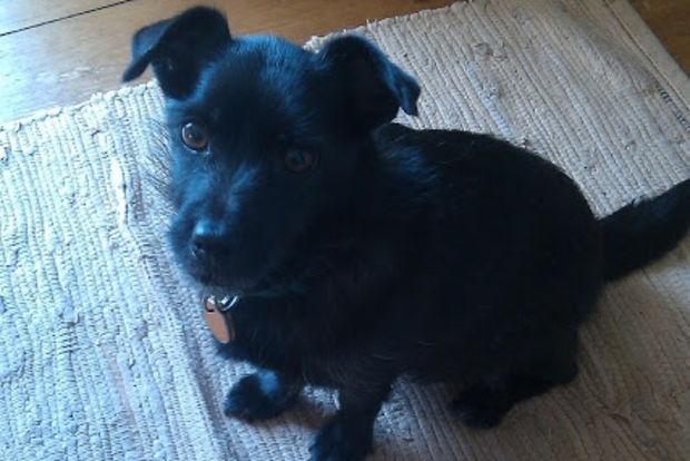 Jackie Kelly's dog daVinci modeled as Toto for John Kearney's final