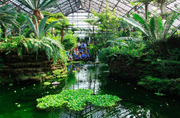 The Fern Room pond is going green for St. Patrick's Day.