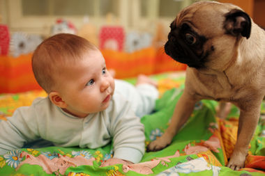 Bringing a baby home can be stressful for your dog, but this expert said it doesn't have to be.