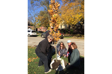 Openlands, a Chicago-focused conservation group, has awarded a grant to plant 18 trees in Beverly. The TreePlanter's program has helped plant some 90 trees in the area since 2014, said Margot Burke Holland, executive director of the Beverly Area Planning Association.