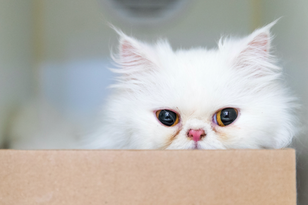 Snow, a 1-and-a-half-year-old white Persian kitten, was stolen on April 15 around 1:15 p.m., the center said.