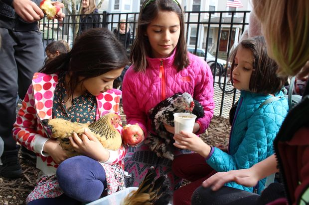 Students learning about sustainability have a new tool at Burley Elementary, where they're in charge of a chicken coop built with money raised through two Whole Foods charity giveback days.