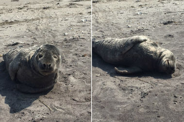 The year-old seal is recovering at the Riverhead Foundation, officials said.
