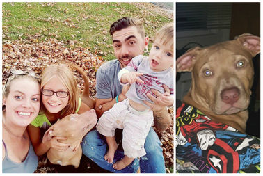Albany Park Family Asking For Help Finding Much-Loved Pitbull, Attila