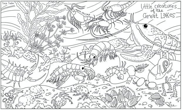 Great Lakes Coloring Sheets