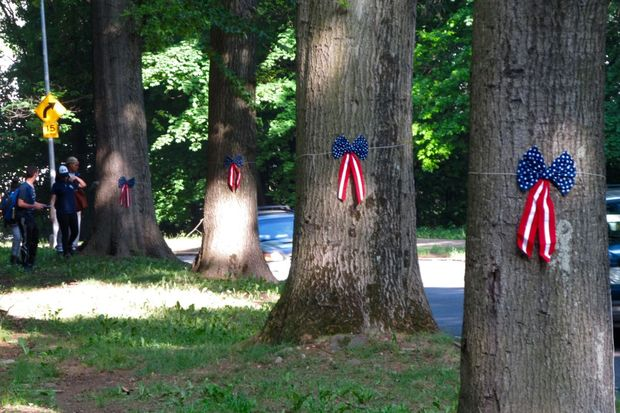 Pin oak trees that were planted in Forest Park in honor of soldiers who died during the First World War.