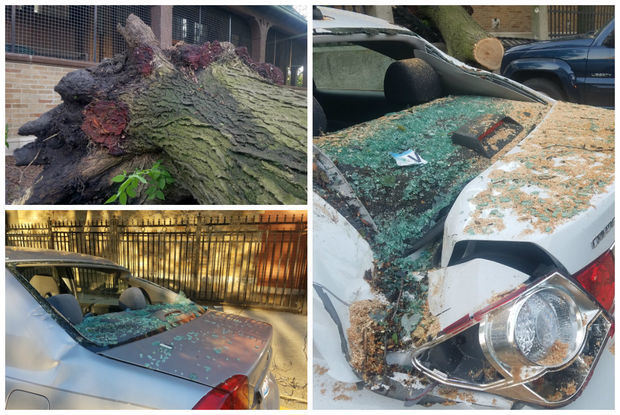 A massive locust tree fell in Pulaski Park and damaged two cars and a light pole.