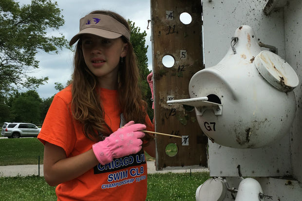 The Purple Martin houses on the west side of Montrose Harbor are maintained by 12 volunteers.