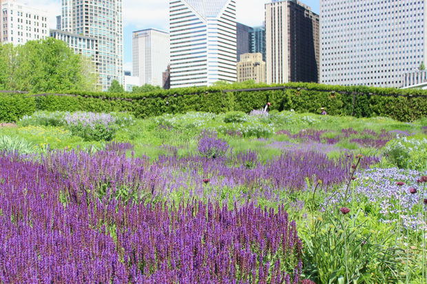 Want a millennium park garden look at home tips from the for Lurie garden planting plan