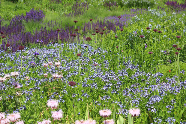 Want A Millennium Park Garden Look At Home Tips From The Planter
