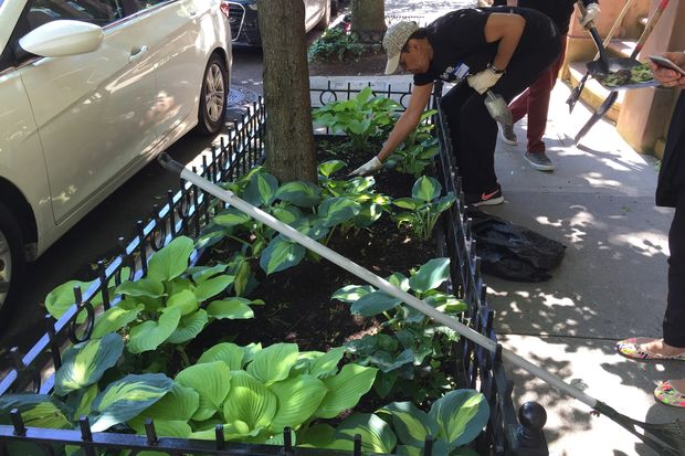 For the first time, the100-168 West 121st Block Association won a Love Your Block grant. Dozens of residents participated in a community service event on June 3, planting flowers and picking up trash.
