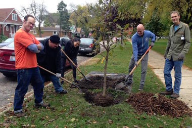 Individuals or groups can apply for up to 50 trees to be planted in their neighborhoods.