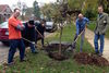Want More Trees On Your Block? Apply By June 15 For An Openlands Grant
