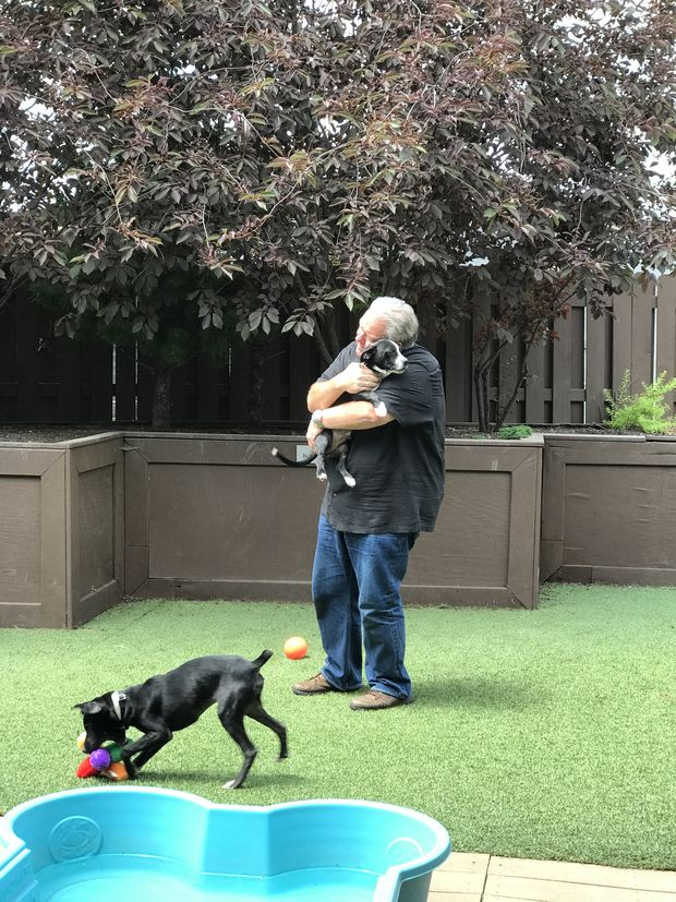 Jim O'Heir plays with puppies on the rooftop deck of PAWS.