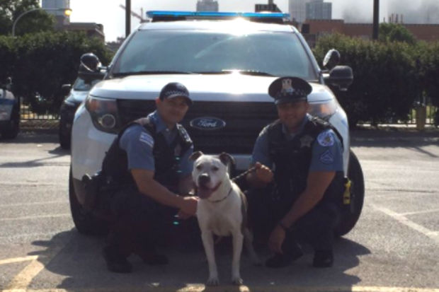 Officers Guzman and Farris rescued a dog from Lake Michigan early Tuesday.