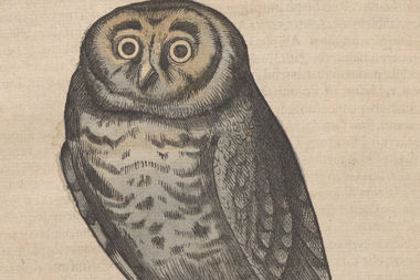 The owl by Swiss naturalist Conrad Gessner looks a lot like Harry's owl, Hedwig.