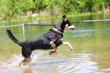 Despite blue-green algae elsewhere in the park, the Dog Beach at Prospect Park remains open, according to the Prospect Park Alliance.