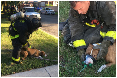 Firefighters rescued this dog and a 71-year-old woman from a fire in South Chicago on Thursday.