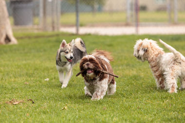 The dog park would be one of two on the city's south side.