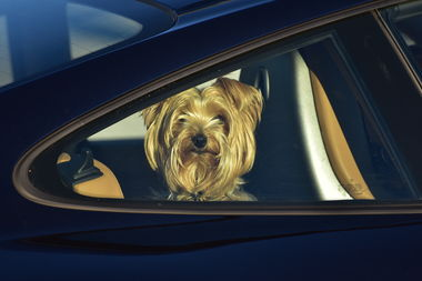 Pet owners who leave their animals in a hot or cold car for any amount of time could be fined at least $300 and as much as $1,000 under a measure proposed by 36th Ward Ald. Gilbert Villegas.