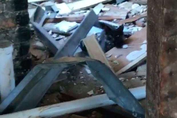 A black kitten trapped in debris inside a demolition site, one of dozens of cats rescuers are trying to save.