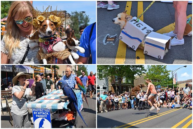 From pit bulls to parrots, Edgewater's pets put on a show at EdgeFest's first ever pet parade Saturday.