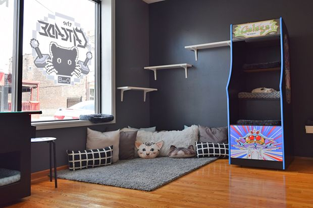 Chicago's first arcade-themed animal shelter and lounge, CatCade, opens Saturday in Lakeview.