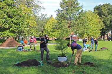 Openlands, a nonprofit conservation group, has donated over 40 trees in the McKinley Park area since 2015.