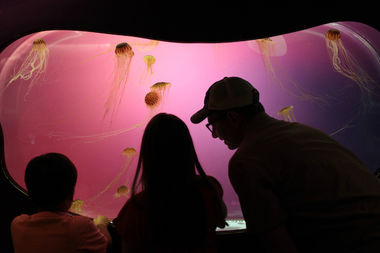 Shedd Aquarium To Host 24 Free Days In A Row After Labor