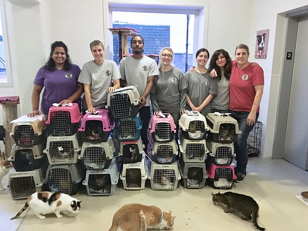 Felines & Canines rescue in Edgewater took in 22 cats that had been flown in from Texas, the first of 100 headed to the Chicago shelter.