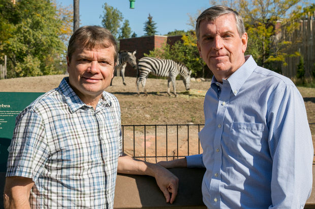 U.S. Rep. Mike Quigley and Lincoln Park Zoo President Kevin Bell visit the new plains zebras, one of which has been named in Quigley's honor.