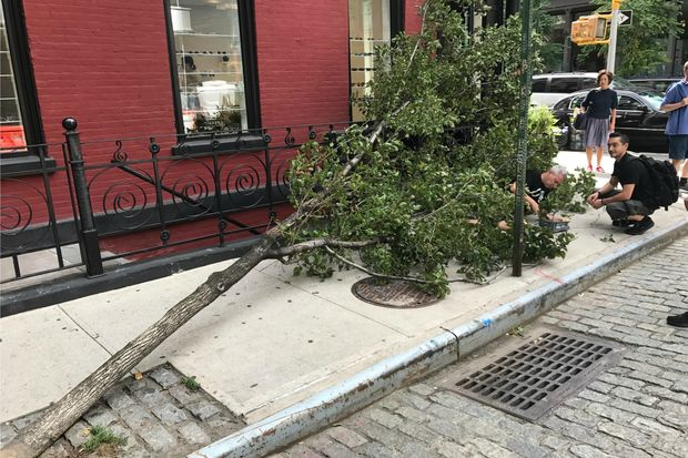 A tree fell on a man on Crosby Street near Broome Street Tuesday afternoon, Sept. 19, 2017.